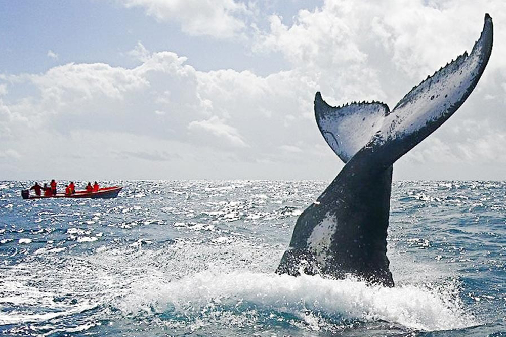 Découverte de la Baleine à Madagascar